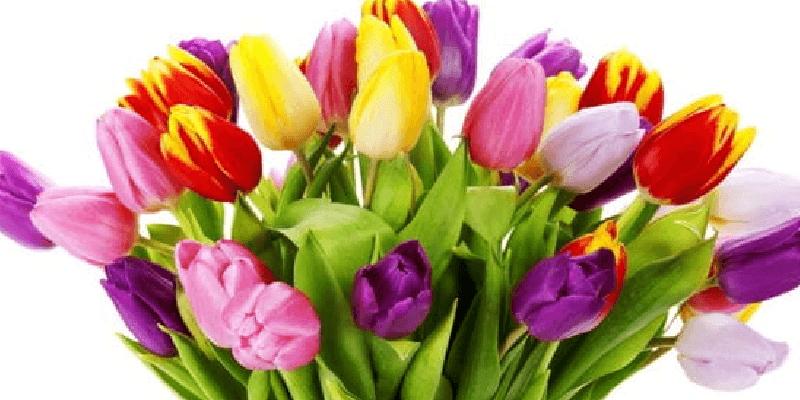 Все-таки зважилися: в Україні скасовують 8 березня ?
